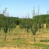 LEPE VESTI: Ako uzgajate OVO voće u Srbiji, možete zaraditi i do 30.000 evra!
