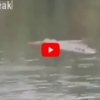 NAJJEZIVIJI SNIMAK: Šaman ušao u vodu tvrdeći da ima SUPERMOĆ, a onda ga je ščepao KROKODIL.. (VIDEO)