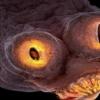 PROČITAJTE NA VREME: Ovo stvorenje je vrlo opasno a živi u mesu koje kupujemo!