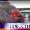 RUSI U NEVERICI: Pa ovo nema ni na filmu, da nisu snimili kamerom, niko im ne bi verovao– kakvo je ovo čudovište!? (VIDEO)