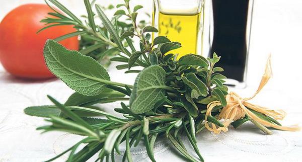 origano-ulje-biljka