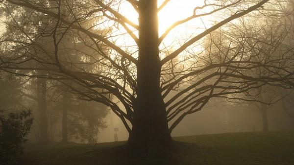 drvo- suma
