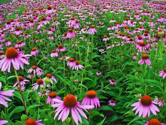 Sezona prehlade i gripa se bliži: Ove biljke vam mogu pomoći da osnažite imunitet