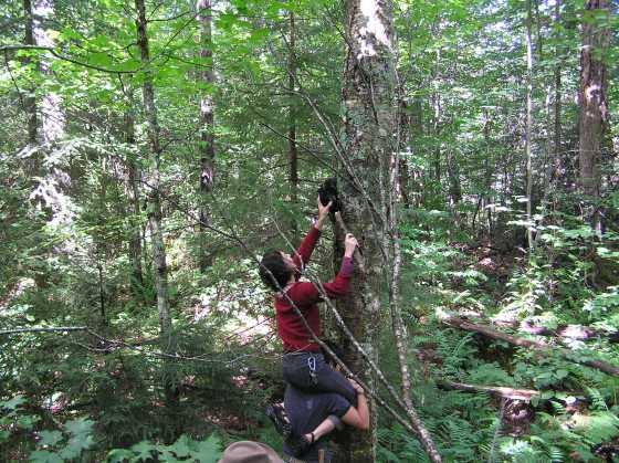 šuma- drvo- ljudi- pecurke