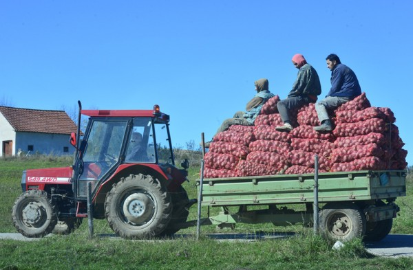 selo- traktor- krompir