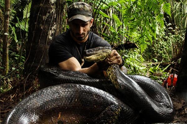 anakonda- zmija- piton