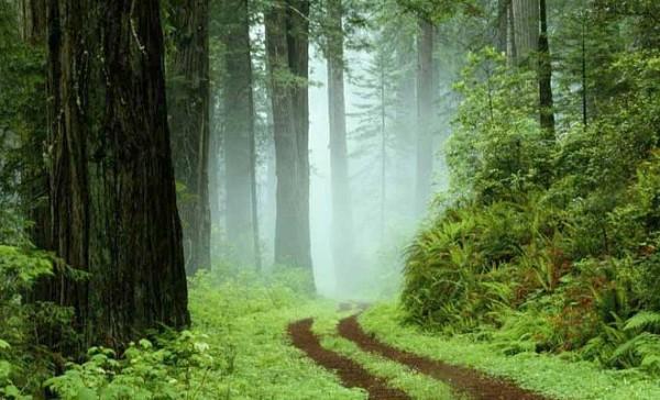 U životu moraš znati kuda si krenuo, jer možda si već tamo! (ČITANJE 2 min., MUDROST ZAUVEK)