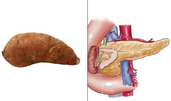 krompir- pankreas
