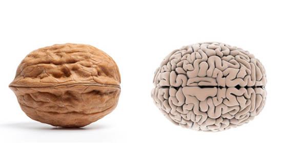 orah- mozak 1