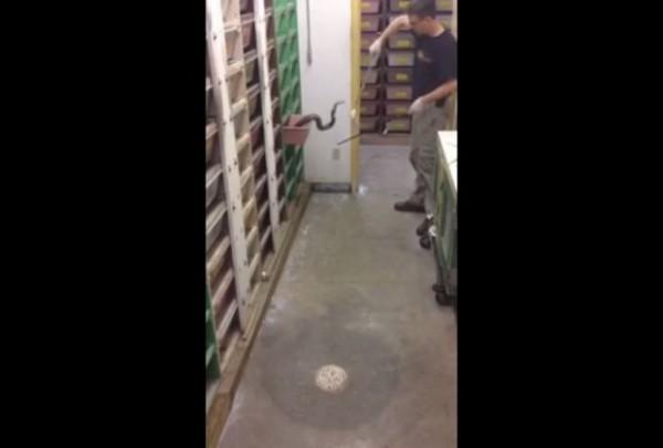 Ako mislite da je vaš posao stresan, pogledajte ovog radnika ako smete! (VIDEO)