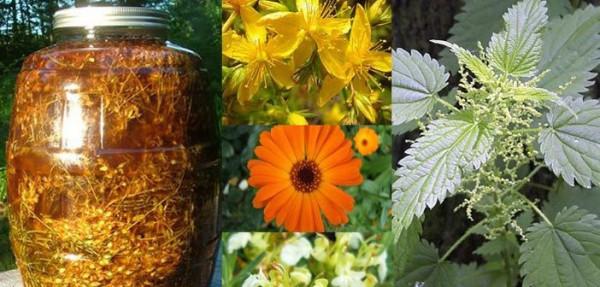 biljke-lekovite