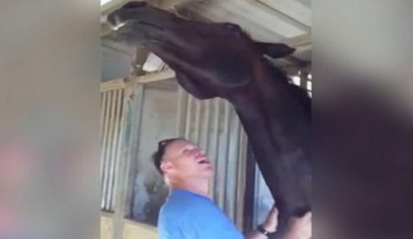 konj- covek