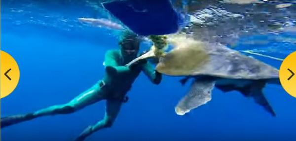 kornjaca- ronilac