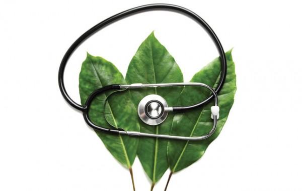 list- biljka