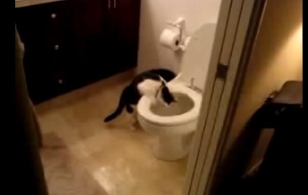 Uvek su se pitali zašto im je račun za vodu tako visok?! Sada znaju zašto! (VIDEO)