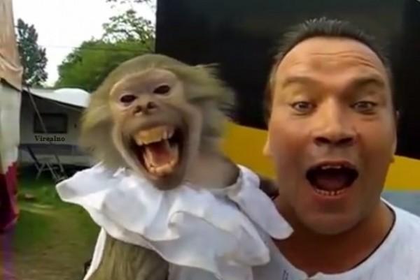 majmun- covek- zabava