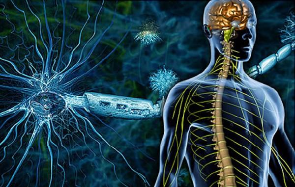 multipla- skleroza