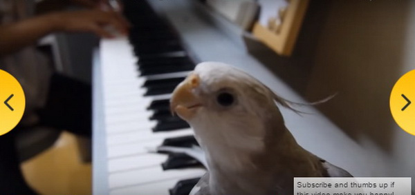 nimfa- ptica