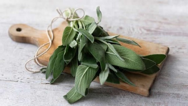 zalfija- biljka