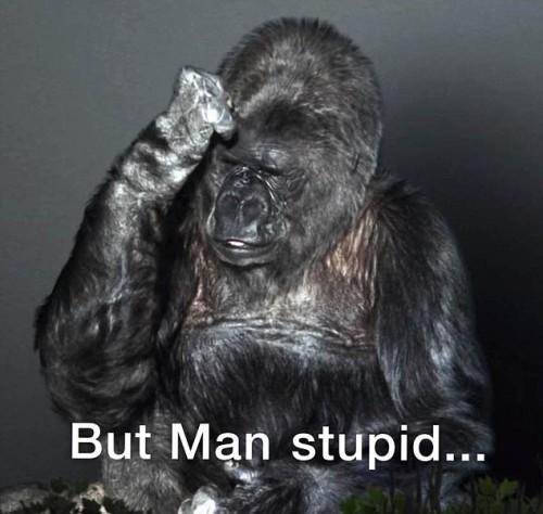 koko-gorila-majmun-zivotinja