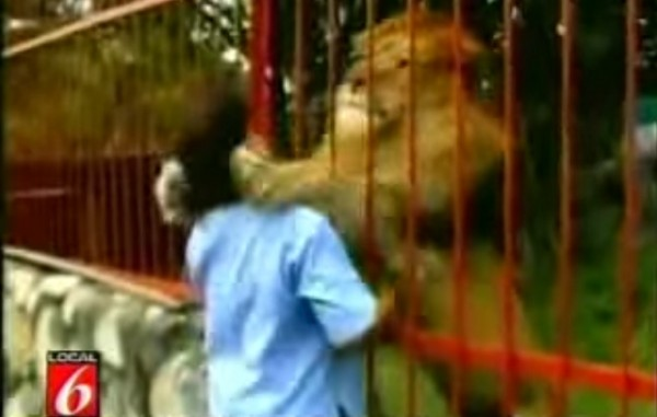 lav-zagrljaj