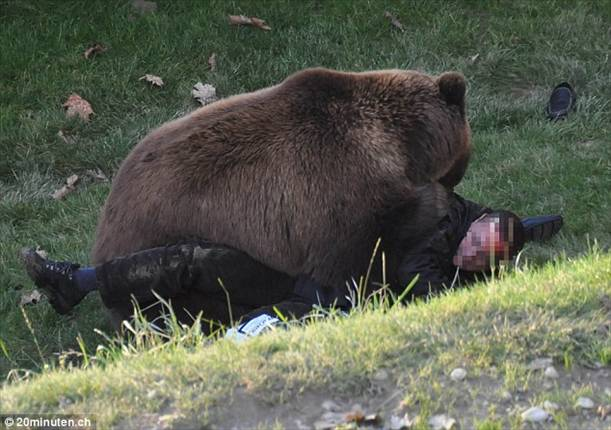 medved- covek
