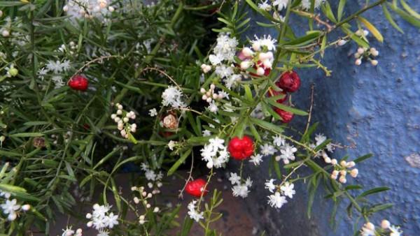 biljka-lekovita