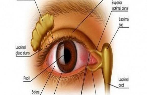 oko-vid