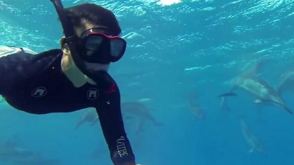 ronilac-delfini