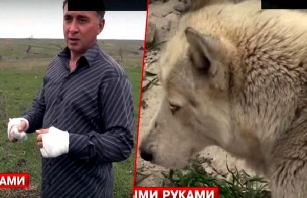 covek-vuk-rusija