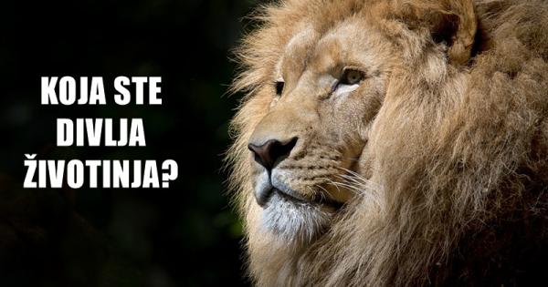 lav-divlja-zivotinja