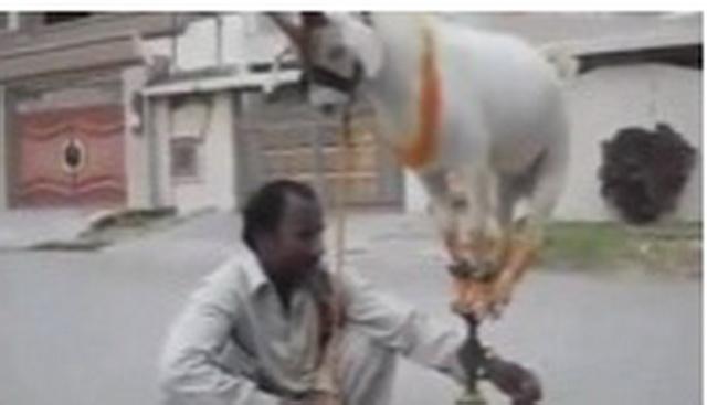 Niko nema pojma šta radi ovaj čovek, ali koza je objasnila sa stajanjem na ovome! (VIDEO)