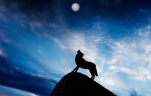 mesec- vuk- zavijanje