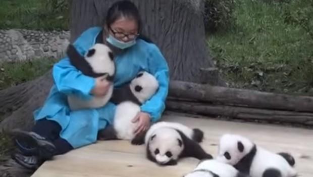 pande-bebe