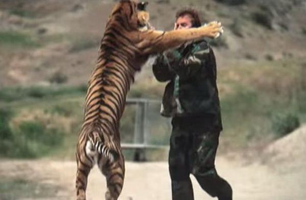 covek- tigar