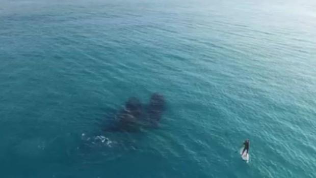 kitovi-covek-more