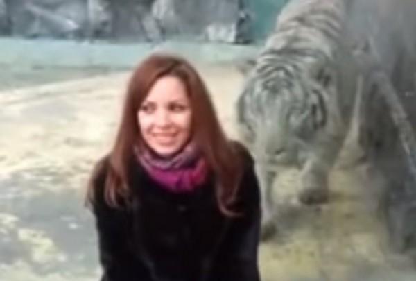 napad-tigra