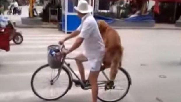 pas-bicikl-voznja