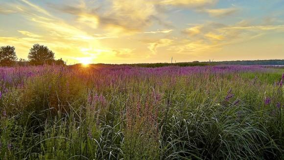 Budite najlepši cvet u bašti života: Poučna priča posle koje nikada nećete poželeti da budete neko drugi