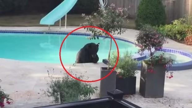 medved-bazenu