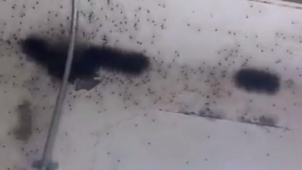 paukovi-na-plafonu