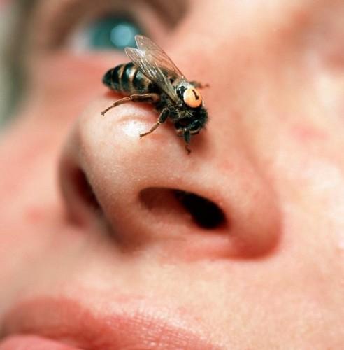 OVO MORATE ZNATI: Kada vas ubode osa, pčela ili stršljen – ovo će vas spasiti bola i otoka!