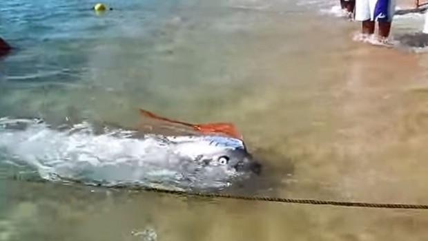 AUUU, OVO JE STVARNO NENORMALNO: Čudovište od pet metara izvučeno iz okeana, svi u ŠOKU! (VIDEO)