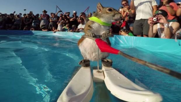veverica-skijanje-voda