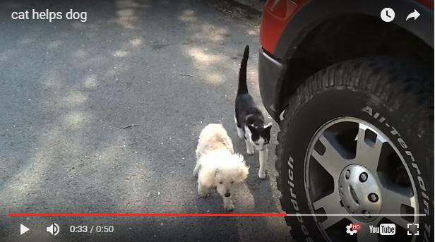 NEVEROVATNO I NEVIĐENO DO SADA: Mačka pomaže slepom psu da se vrati kući! (VIDEO)
