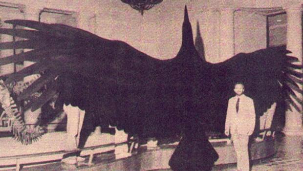 OVO NIJE FOTO-MONTAŽA: Saznajte sve o monstruoznoj ptičurini sa slike! (FOTO)