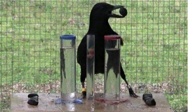 vrana-ptica-fizika-test