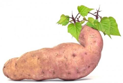 krompir-batat
