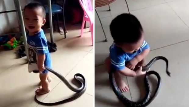 dete-zmija