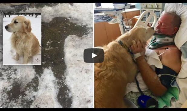 Muškarac pao na ledu i slomio vrat: Pas je ležao na njemu 20 sati i sačuvao ga sigurne smrti (VIDEO)